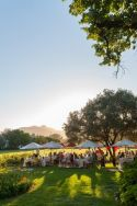 Celebrate the 2019 Wine Grape Harvest with Nederburg