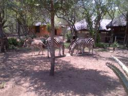 Crocodile River Lodge - Rhinos Rest