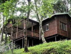 Forest Bird Lodge