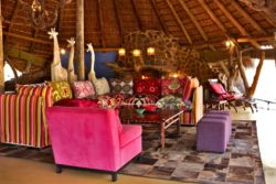 Jaci's Safari & Tree Lodge