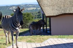 JBay Zebra Lodge