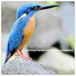 Kingfisher @ The Beach @ The Cove Langebaan