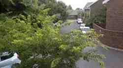 Oak Tree Gardens