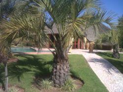 Palmgrove Lodge