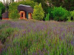 Reeds Country Lodge
