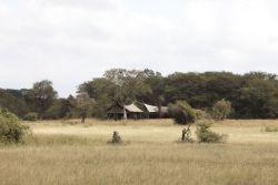 Rhino Walking Safari's