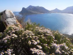 Room in Hout Bay