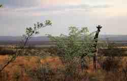 Shakati Private Game Reserve