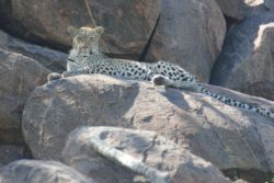Wild At Tuli