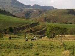 Wyford Farm