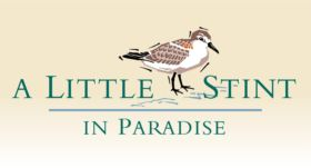 A Little Stint in Paradise