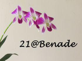 21 Benade