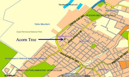 Map Acorn Tree in Newlands (CPT)  Southern Suburbs (CPT)  Cape Town  Western Cape  South Africa