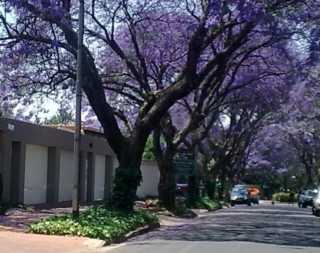 Birdview Rosebank B&B