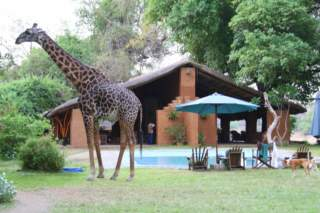 Croc Valley Camp/Lodge