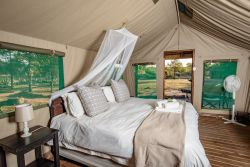 Safari Twin/Double Tent Room Thumbnail Pic 1