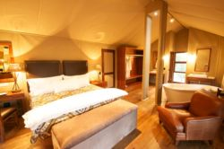 Luxury Tent Room Thumbnail Pic 1