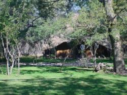 Chinaka Lodge - Modjaji Chalet (Sleeps 3) Room Thumbnail Pic 1