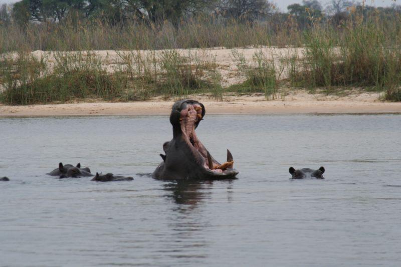 Hippo Car Hire Namibia