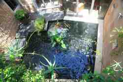 Koi Pond which can be enjoyed with all lounge doors open.  Indoor-outdoor living.