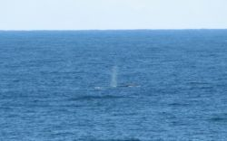 Whale seen from the balcony