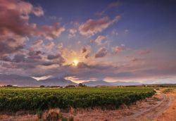 Part of the Cape Wineland with the Breede Valley vineyards on our doorstep