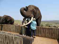 Elephant Interaction nearby