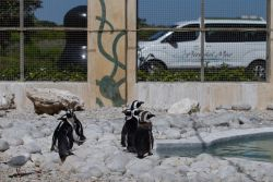 Attractions - SA Penguin and Seabird Sactuary