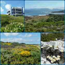 Only fynbos between you and the ocean