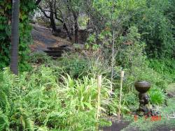 The pathway from the garden leading into the Koppie