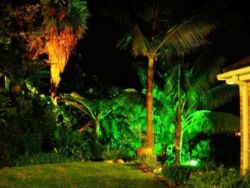 Garden lights at night