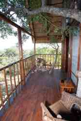Tree house balcony with branches growing through