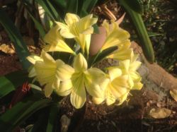 We specialize in Clivias, Bromeliads and Orchids
