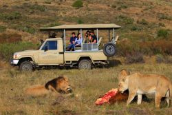 Activity: Guided Game drive