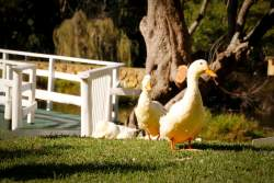 Bird Watching - ducks at Botterkloof