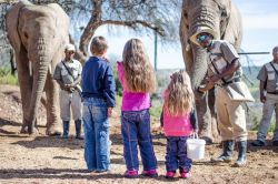 Elephant Feeding Experience - Fun for the whole family