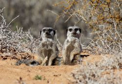 Come and see us! Book a farm or meerkat tour!