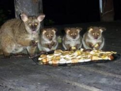 Bushbabies - meet the local residents