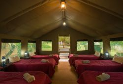 Bushwillow Tented Camp - Open plan tent