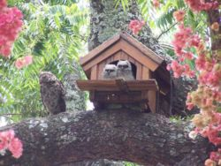 Owlets and mother owl in owl-house