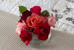 Fresh Roses from the garden