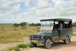 Etosha Village Game Drives