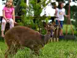 Visiting bushbuck and other animals to delight (Copyright Forest Edge)