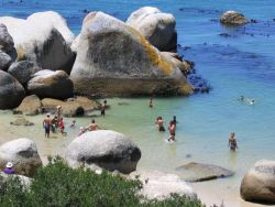 Boulders Beach famous for its African Penguin Colony and swimming with the penguins!