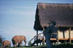 Elephants in front of tented suite