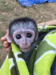 Make a difference to orphaned wildlife