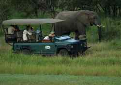 Honeyguide Game drive vehicle