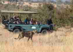 Mantobeni Game drive vehicle