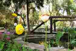 Beautiful garden with water features, hammocks and an African barbeque area.