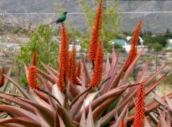 Birdlife aplenty at karoo View Cottages